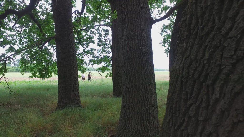 hót-fák2